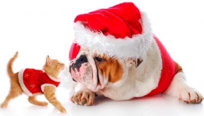 Seasonal Pets