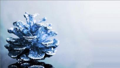 Blue Pine Cone
